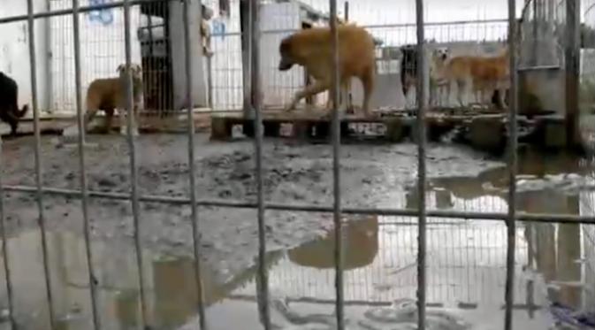 Melihat Anjing Terlantar, Wanita Ini Membeli Satu Penampungan. Sumber : mymodernmet.com.